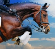 equestrian-event-in-north-notts-def.jpg