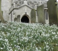 babworth-all-saints-church-snowdrops.jpg